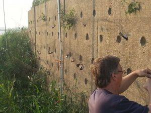 Kunstwand Oeverzwaluw bij Eeltjemeer onder Rinsumageest